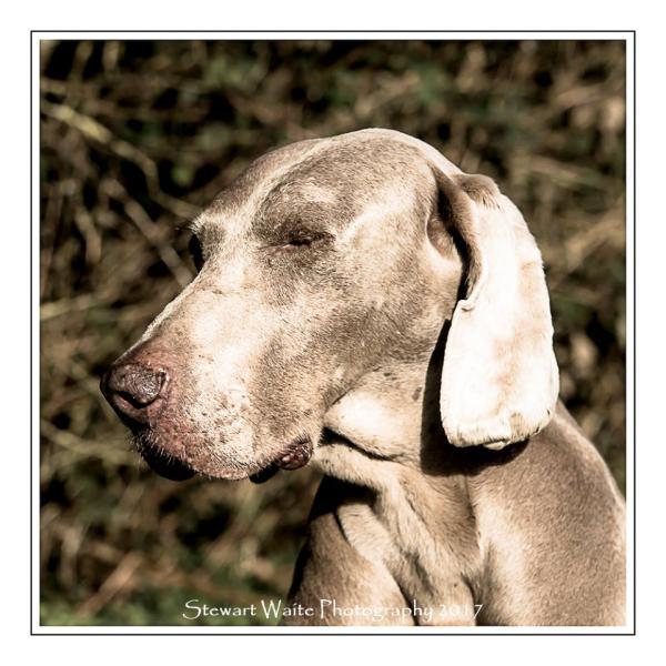Pet Portrait Photography Package
