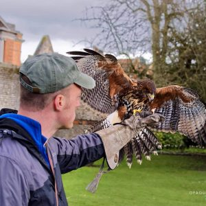 Bird of Prey Flying Experience